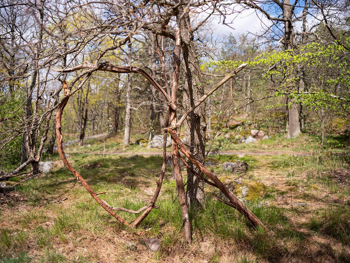 Silent Spring / Tyst vår